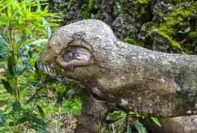 PATO BICUDO – Ilha de São Miguel-Açores
