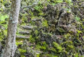 ESCADAS, RELVAS E MUSGOS – Ilha de São Miguel-Açores