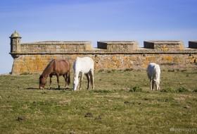 PASTO SEGURO – Forte de Santa Tereza-Uruguay