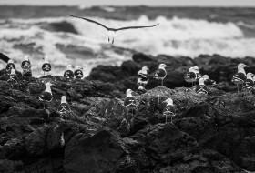VOANDO NA CRISTA DA ONDA – Punta del Este-Uruguay