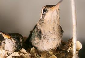 TWO LITTLE BIRDS – Porto Alegre-Rio Grande do Sul-Brasil
