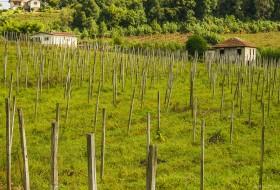 PLANTANDO PARA COLHER – Bento Gonçalves-Rio Grande do Sul-Brasil