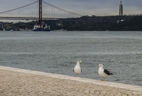 CARTÃO GAIVOTAL – Lisboa-Portugal